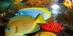 الأسماك 300x200 240x120 - معلومات غربية  عن الاسماك