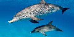 dolphins facts 835 1 1518280335 240x120 - انواع الدولفين واهم المعلومات عنه بالصور