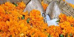 download 21 240x120 - أغرب تقاليد الزواج في الهند