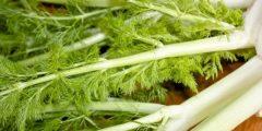 طبيعية لزيادة الوزن 240x120 - أعشاب لزيادة الوزن