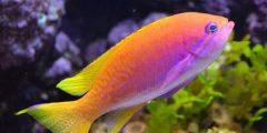 240x120 - معلومات عن الأسماك لم تسمع عنها من قبل