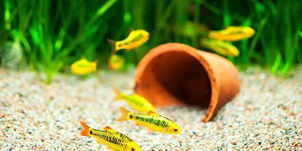 عند شراء حوض السمك المنزلي - معلومات عن حوض السمك الزينة