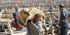 eid 240x120 - تقاليد الاحتفال بعيد الاضحى في مصر