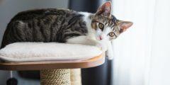 things cats hate 10998 1 1550504393 240x120 - بهذه التصرفات لا يحبك قطك