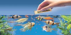 أسماك الزينة 240x120 - كيفية العناية بأسماك الزينة