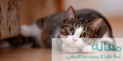 541 240x120 - اسماء قطط اناث