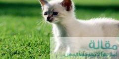 ما هي مراحل نمو القطط