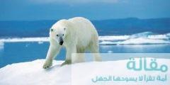1 471 240x120 - طرق تكيف الدب القطبي