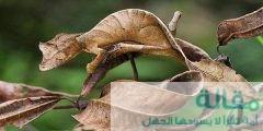 1 478 240x120 - طرق تكيف الكائنات الحية مع البيئة