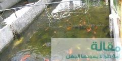 1 488 240x120 - طرق تفريخ أسماك الزينة