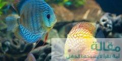 تتنفس الأسماك تحت الماء 240x120 - طريقة  تنفس الأسماك تحت الماء