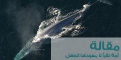 معلومات عن أنواع الحيتان