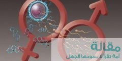 دور هرمون الإستروجين في الجسم
