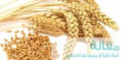 ما فائدة القمح