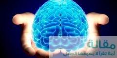 ما هي عالعلاقة بين التثاؤب و حجم الدماغ.