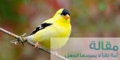 فصيلة طائر الحسون