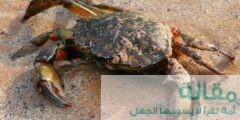 تكاثر سرطانات البحر